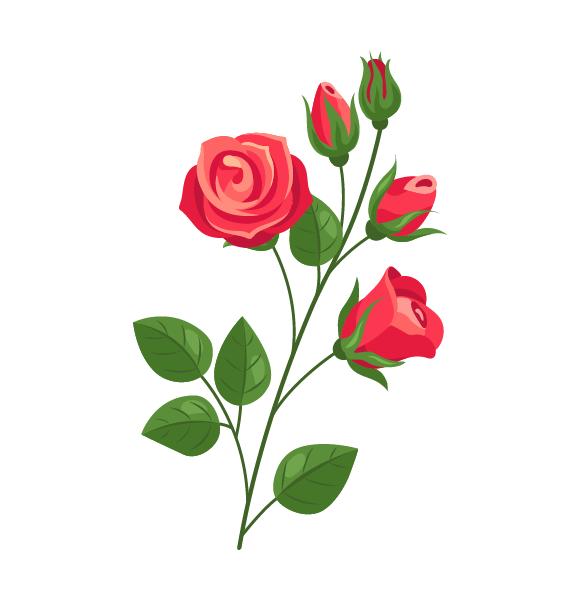 バラ|取扱品目|ミモザ・ユーカリ・バラを取り扱う生産者団体「Mr.Wattle(ミスターワトル)」